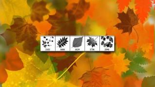 Кисти листья