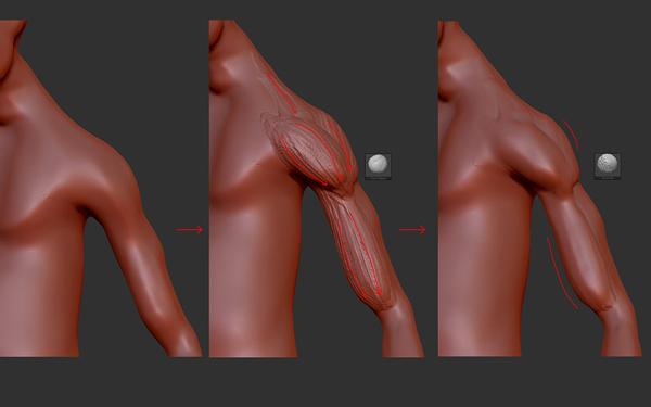 Последовательно проработайте форму, а затем и волокна мышц