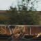 Завораживающие фотографии путешествующих на грузовых поездах от Майка Броди